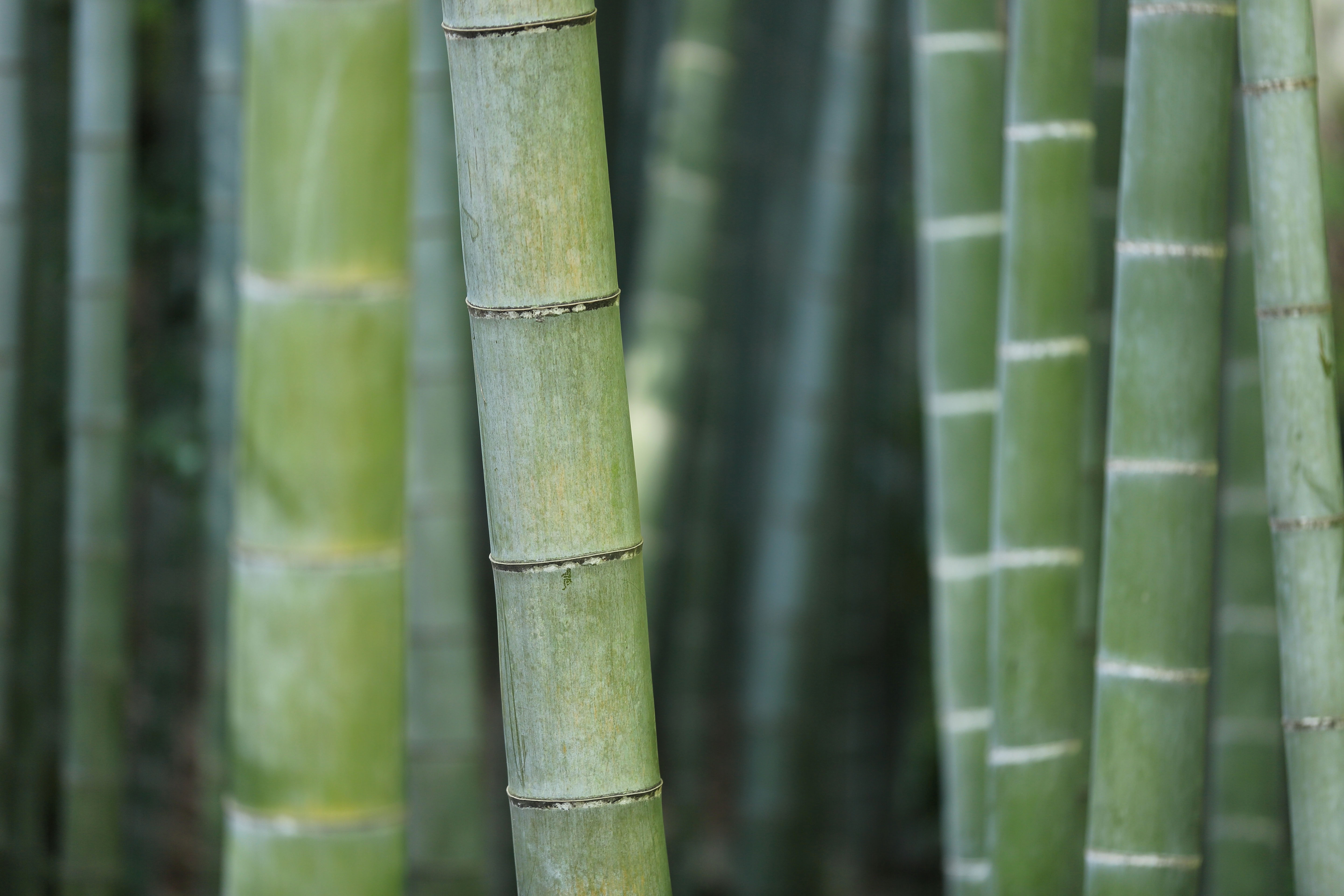 green bamboo forest front page
